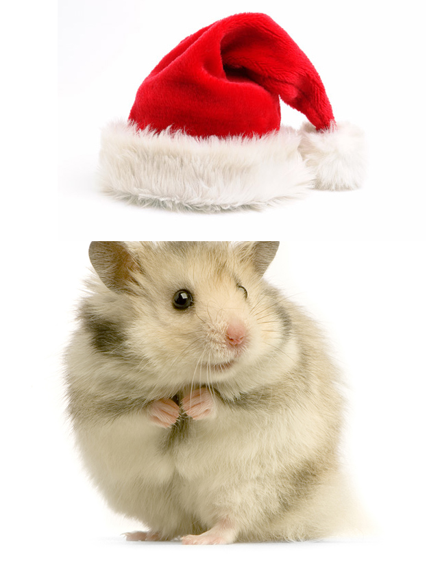 create-a-funny-christmas-picture-with-animals-in-photshop